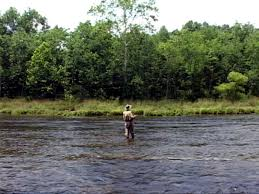 Fly Fishing On The South Holston River In Tennessee