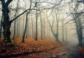 Image result for fall winter images