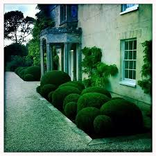 Small Picture The 25 best Buxus ideas on Pinterest Buxus sempervirens Green