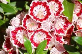 Gardening Australia  Fact Sheet Shade LoversClimbing Plants That Like Shade