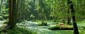 """Résultat de recherche d'images pour """"la forêt"""""""