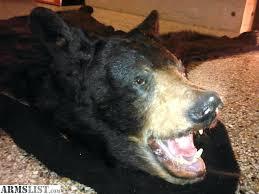 bear skin rug gif taxidermy