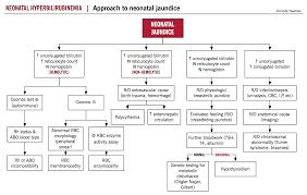 Neonatal Hyperbilirubinemia Mcmaster Pathophysiology Review