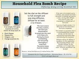 young living black pepper peppermint oregano orange essential oils flea recipe