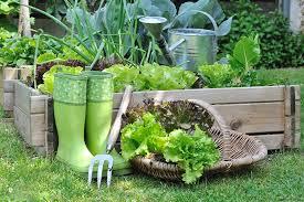 vegetable garden for beginners