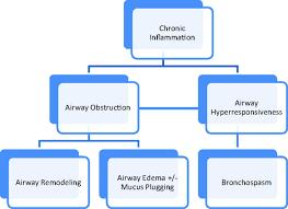 Pathophysiology Of Emphysema Flow Chart Asthma Chronic Obstructive Pulmonary Disease Copd And