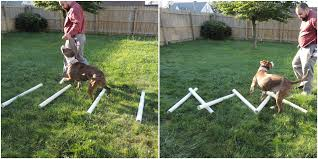 diy agility equipment part ii ladders dog walk and slam board