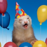 Partie Ferret - IT Support Specialist - State of South Carolina | LinkedIn