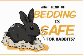 bedding for rabbits is it even necessary