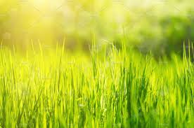 grass field background. Grass Field Background A