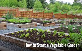 how to start a vegetable garden home
