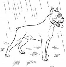 Boxer Energetic And Funny Color Pages Dog Coloring Page
