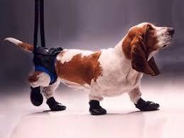 Dog lift hunde tragehilfe hundegeschirr dog lift harness stützgurt, stützgurt hinten hilfe schwache beine aufstehen, gehen, treppensteigen für mittlere und große. Tragehilfen Und Gehhilfen Fur Hunde Seniorpfoten