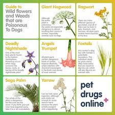 plants safe for dogs uk