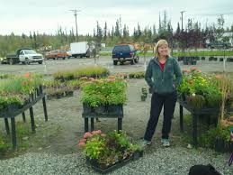 wonderful youngs garden center ken s alaska small business development