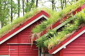 grow a living roof or green roof sustainable living