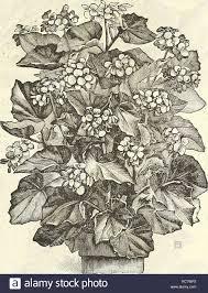 dreer s garden calendar for 1888 seeds catalogs nursery stock catalogs gardening catalogs flowers seeds catalogs single abutilons thompsoni plena