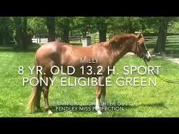 Millie- Medium Pony for Sale - YouTube