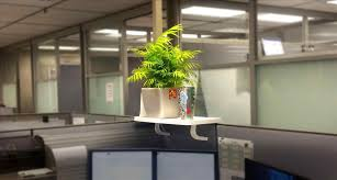 office cubicle plants. Office Cubicle Plants. Youtube Ation Decor Plants Flowers And In Singapore Shelf Extender