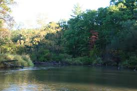 Pere Marquette River Hatch Chart Pere Marquette River Westmichiganflyfishing Com Jeff