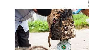 Asian street meat pet