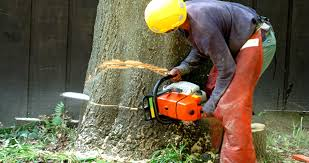 Tips to start your own tree removal company | Zoloox