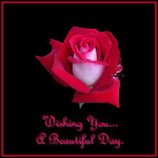 good day beautiful pretty red rose