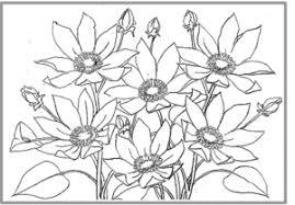 クレマチス 誕生花 絵手紙 塗り絵 塗り絵で癒し 風景画 花の絵