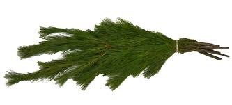 White Pine Long Need Gertens Recommended Boughs