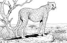 Small Picture Pics Of Cheetah Print Coloring SheetOfPrintable Coloring Pages