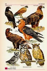 Хищные птицы Гипермаркет знаний Хищные птицы