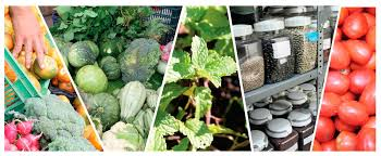 Resultado de imagen para productos agro y pecuarios, forestales y biológicos