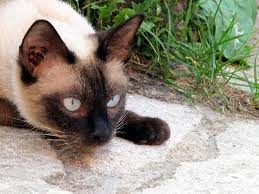 Поведение кошки на своей территории компаньон безопасное место  Как кошки ведут себя на своей территоpии