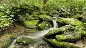 great smoky mountains national park roaring fork motor nature trail travel guide southeastern traveler