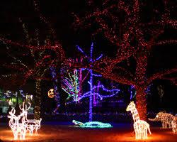 zoo lights. Delighful Zoo ZooLights For Zoo Lights