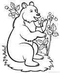 Лес раскраска для детей картинка 136
