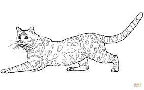 Small Picture Savannah Name Coloring Sheet Coloring Pages