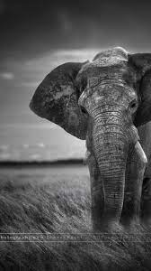 Baby Elephant iPhone Wallpapers - Top ...