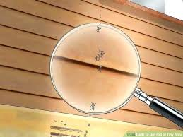 ants in the kitchen how to get rid of ants in your kitchen cabinets image titled