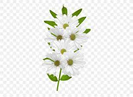 flower common daisy clip art png