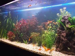 Amazing Aquarium Design Feng Shui Aquarium Placement And Design Lovetoknow