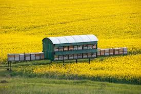 Αποτέλεσμα εικόνας για Honey and beekeeping plants