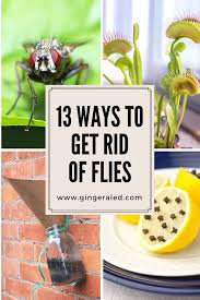 25 unique how to repel flies ideas