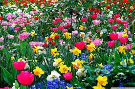 desktop wallpaper flowers high resolution.  High Desktop Wallpaper Flower  And Flowers High Resolution F