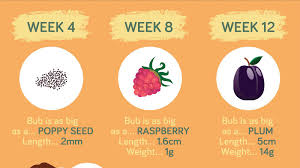 Tummy Growth Chart During Pregnancy Baby Growth Chart How Big Is Your Baby This Week Infographic