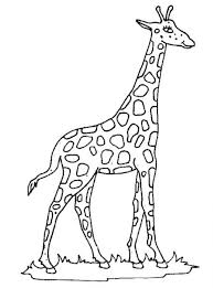 Small Picture Printable Giraffe Coloring Pages Coloring Me