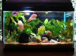 Fun Fish Tank Decorations What You Should Know Before Setting Up A Fish Tank