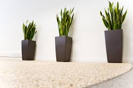 Image Interior Office Plants For The Workplace Whitespace Consultants Office Plants Bolton Manchester Cheshire Lancashire Liverpool