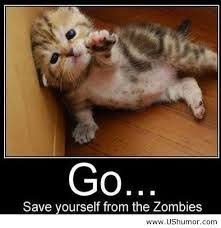 cute kittens quotes for kids. Exellent Quotes Funny Animal Quotes For Kids  Google Search Intended Cute Kittens Quotes For Kids L