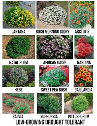 Small Picture Best 10 Drought resistant landscaping ideas on Pinterest